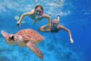 see turtles when snorkeling in Bali