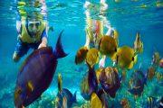 snorkeling in bali-best fun underwater