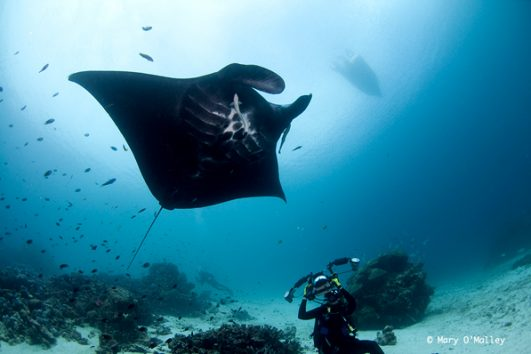 Scuba Diving Bali - Nusa Penida And Lembongan dive with manta rays