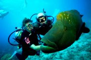 giant grooper on the Scuba Diving Bali - PADI Rescue Diver Course