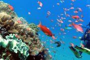 leanr more on Scuba Diving Bali - PADI Rescue Diver Course