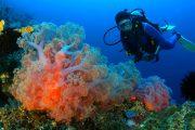 beautiful coral Scuba Diving Bali - Scuba Diving advanced Certification