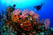 come dive with us scuba diving in bali at tulamben wreck site