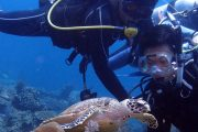 see turtles on tulamben wreck diving-scuba diving in bali