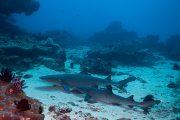 see sharks in padangbai scuba dive