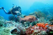 padangbai fun dive and see the underwater world of balo