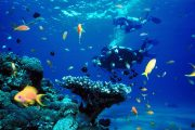 scuba diving in padang bai with fish to see