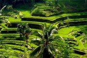 ubud most popular rice paddy viewing