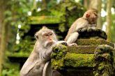Monkey Forest Ubud Tour