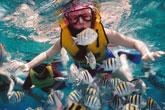 Nusa Lembongan Fishes
